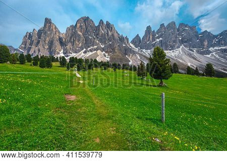 Beautiful Summer Alpine Scenery, Flowery Green Fields, Pine Trees And High Snowy Mountains In Backgr
