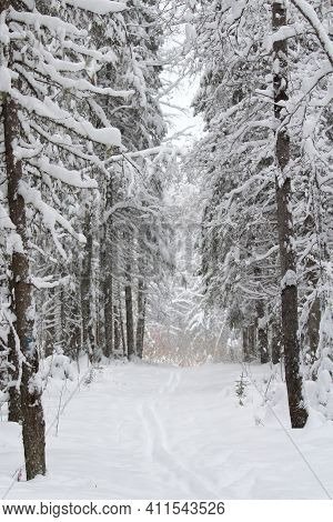 Snow Covered Deserted Alley With Trees. Calm, Quiet, Cozy, Winter, Magical Mood. Gardening Of The Ci
