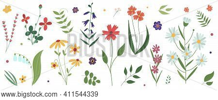 Collection Of Wild Blooming Meadow Flowers. Flat Colorful Botanical Vector Illustration.