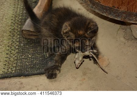 Close-up View Of Kitten Caught Mouse On Wooden Floor