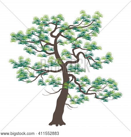 Old Japanese Pine With Dark Trunk And Green Fir Needles Isolated On White Background. Conifer Tree S