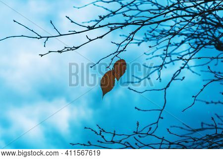 Photo Of A Mystical Fantasy Forest. Dry Orange Leaves In The Wind. Silhouettes Of Trunks And Branche