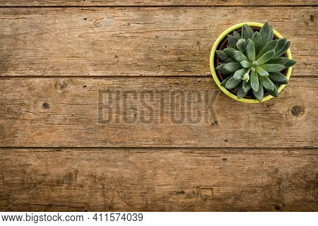 Rustic weathered wood background with potted succulent plant and copy space
