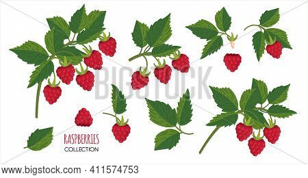 Raspberry Plant Twig. Sprig Of Raspberries Set With Berry And Leafs. Elements Constructor For Design
