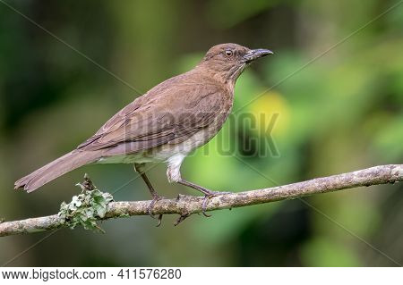 Portrait Of A Blackbird On A Branch With Mushrooms