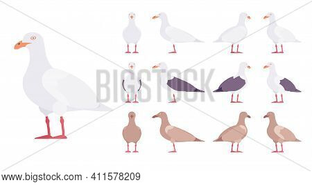 Gulls, Seagulls Wildlife Seabirds And Marine Set. Wildlife Study, Ornithology And Birdwatching Conce