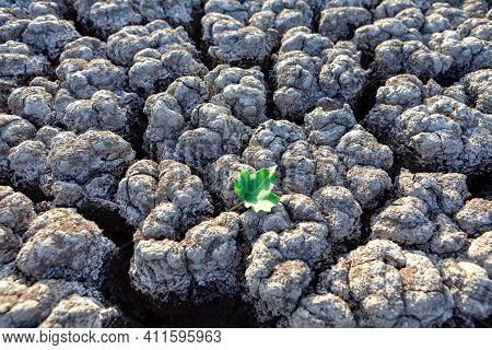 Green Leaf On The Drought Land . Green Leaf On The Drought Land . Ecological Disaster Of Drought Wea