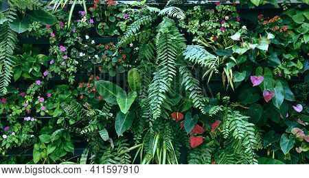 Plant Wall With Lush Green Colors, Variety Plant Forest Garden On Walls Orchids Various Fern Leaves