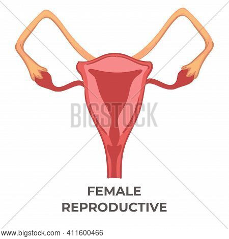 Female Reproductive System Of Woman, Biology Icon