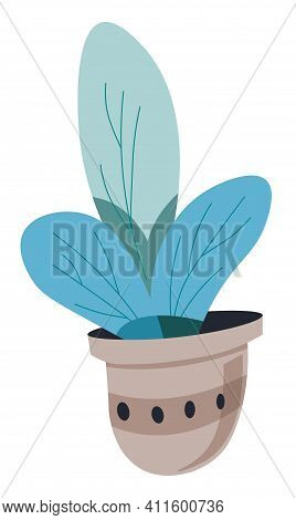 Plant With Lush Foliage In Pot, Flower Foliage