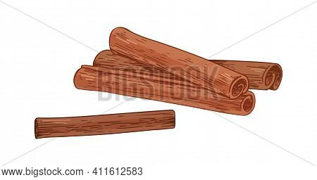 Detailed Dry Cinnamon Sticks. Sweet Aromatic Winter Of Cinamon. Colored Hand-drawn Vector Illustrati