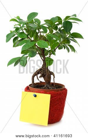 Small Tree With A Blank Paper