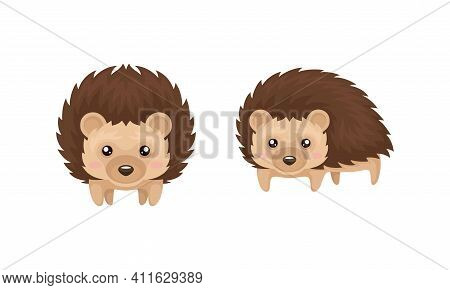 Prickly Hedgehog As Forest Animal In Different Poses Vector Set