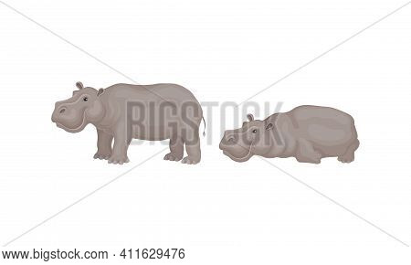 Hippopotamus Or Hippo As Large Semiaquatic Mammal In Different Pose Vector Set