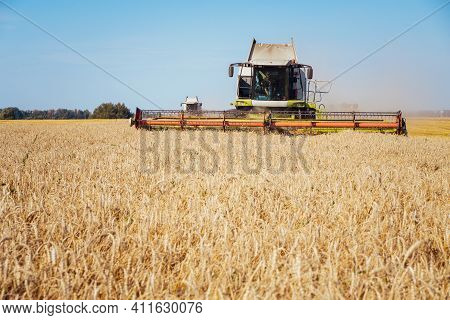 Combine Harvester Harvests Ripe Wheat. Ripe Ears Of Gold Field On The Sunset Cloudy Orange Sky Backg