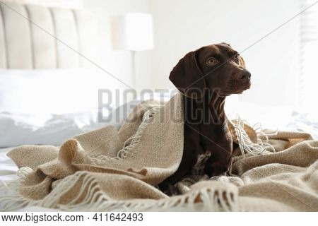 Adorable Dog Under Plaid On Bed At Home