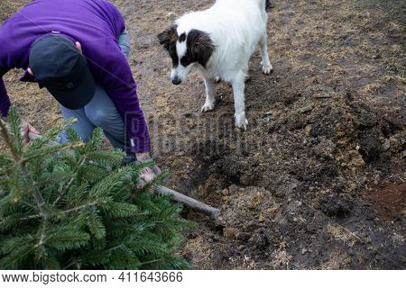 man planting fir tree in the back yard home gardening
