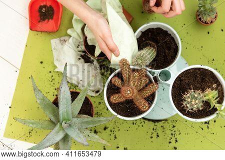 Gardening Home. Girl Replanting Green Pasture In Home Garden. Indoor Garden, Room With Plants Banner