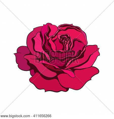 Red Rose Flower Fully Open. Design Element Tattoo, Greeting Cards, Flower Shops. Realistic Hand Draw