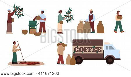 Farmer Working On Agriculture Farm. Process And Manufacturing Stages Coffee Production - Harvesting