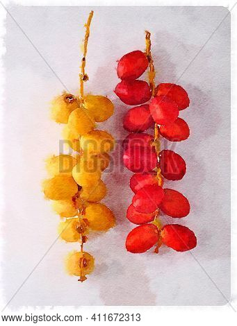 Water color art illustration of the food ingredients . Illustration of  bunch of unripe dates.