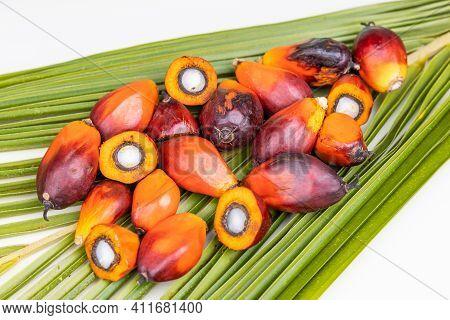 Group Of Freshly Harvested Oil Palm Fruits On Palm Leaf