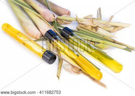 Lemongrass Essential Oil Extract With Test Tubes Against Fresh Lemongrass Plant.
