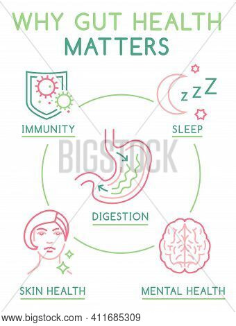 Why Gut Health Matters. Vertical Poster. Medical Infographic. Digestion Is Important. Stomach Functi