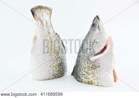 Fresh Barramundi Fish Over White Background. Side View.