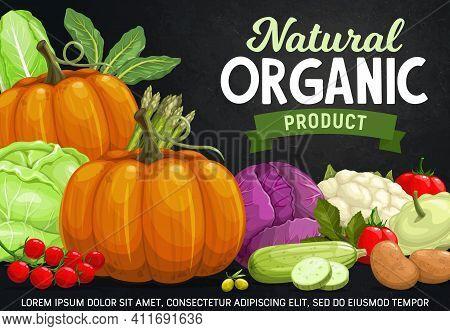 Vegetables On Chalkboard Vector Design Of Fresh Farm Veggie Food. Tomato, Zucchini, Pumpkin And Caul