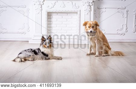 Two Dogs Sitting At Home Together, Border Collie With Empty Iron Bowl In His Teeth, And Sheltie Marb