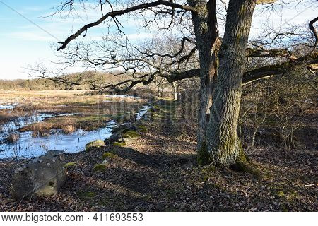 Old Walkway In Early Springtime In A Nature Reserve By Borgholm On The Island Of Oland In Sweden