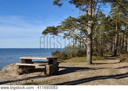 Coastal Resting Place In A Pine Tree Forest By Sandbergen On The Island Of Oland In Sweden