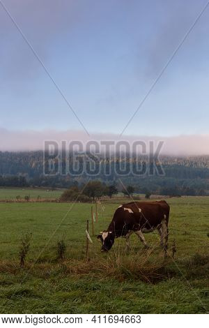 Sunrise Over The Pasture With Cows. Idyllic Eco-friendly Farm Life In Eastern Europe