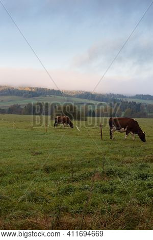 Idyllic Eco-friendly Farm Life In Eastern Europe. Sunrise In Autumn Over The Pasture With Cows
