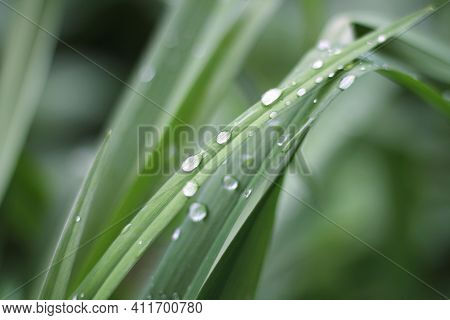 Water Drops Or Morning Dew On Fresh Green Grass. Nature Background