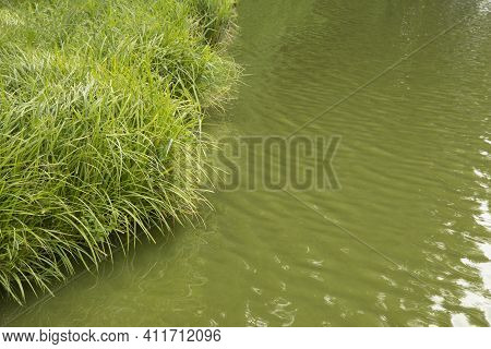 Image Of Small Fishing Lake With Green Water And Rags Around With Place For Text