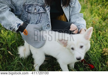 Woman Combing Out Puppy Fur With Deshedding Glove In Summer Park. Molting Puppy, Pet Grooming