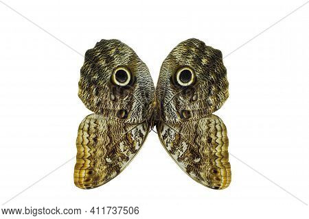 Butterfly Wings Similar To The Face Of An Animal. Funny Dog Face On Wings Of Protective Color. On Th
