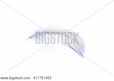 Feather Soft. Multicoloured Pastel Angel Feather Closeup Texture Isolated On White Background In Mac