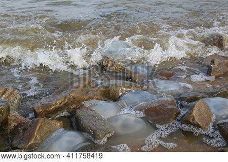 Kornerot Transparent Jellyfish Washed Up On The Beach In The Sea Of Azov