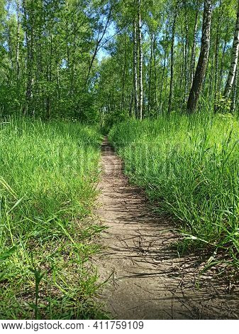 Footpath Through Park In Spring. Green Spring Forest With Path. High Green Grass On Forest Path. Wal