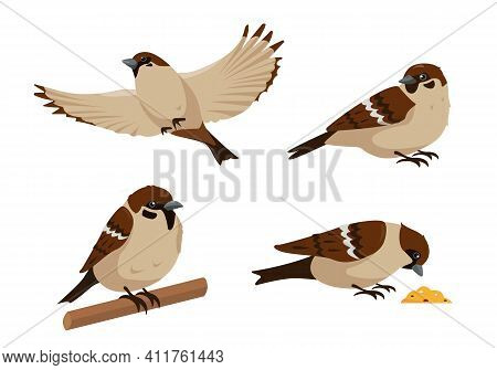 Set Of Sparrows In Different Poses Isolated On White Background. Collection Of Sparrow Birds Icons V