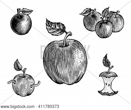 Apples, Vector Illustration. Vintage Graphics And Handwork. Drawing With An Ink Pen And Pencil. The