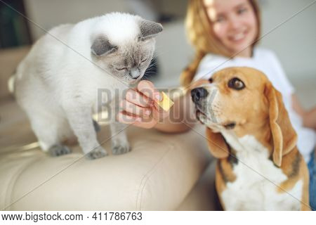 The Child Feeds The Dog And Cat Together. House. Close-up. The Concept Of Pet Food, Treat. High Qual