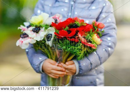 Closeup Of Little Toddler Lovely Girl Hands With Red And White Ranunculus Flowers In Spring Garden.