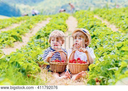 Two Little Sibling Kids Boys Having Fun On Strawberry Farm In Summer. Children, Cute Twins Eating He