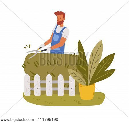 Garden Worker Pruning Hedge With Pruners Or Garden Shears. Man Working With Shrubs In Backyard. Colo