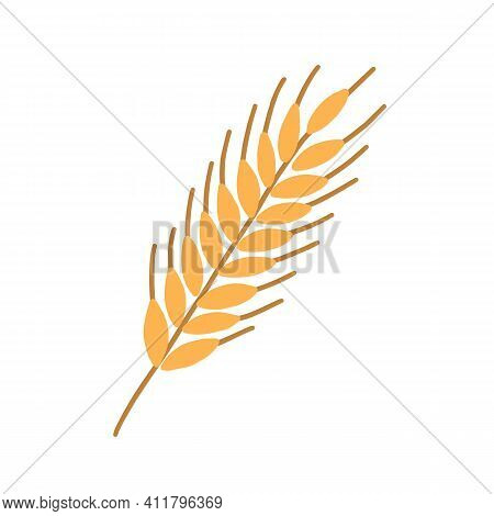 Stalk Of Rye Ear Or Spikelet With Seeds, Grains And Spikes Isolated On White Background. Colored Fla