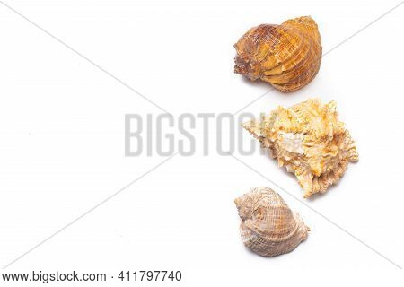 Seashell On A White Background . An Article About Seashells. Vacation At The Sea. Shopping By The Se